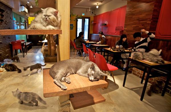 edited A-Cat-Cafe