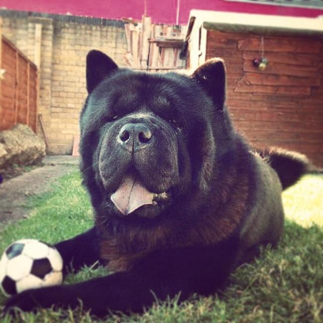 Dog-parlour-3